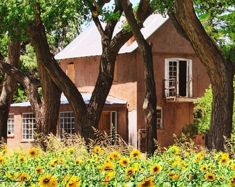 Adobe in the Sunflowers, Fine Art Photo, Southwest, Old House, 16x20 Matted Photo, Sunflowers, Rustic, New Mexico, Home Decor,Office Decor