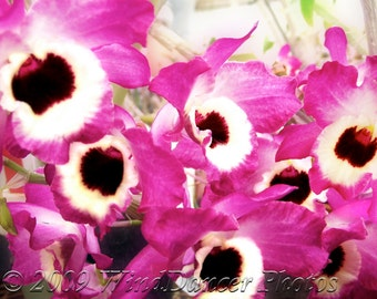 Joyful Chaos -  8 x 10 Fine Art Orchid Photograph - Flower Photo - Orchid Photo - Magenta - Home Decor - Gift Idea