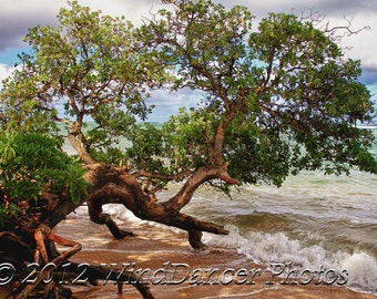 Dancing with the Sea - 11 x 14 Fine Art Tropical Photo - Hawaii Photo - beach Photo - Home Decor