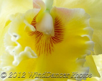 Shy Unfolding -  11 x 14 Fine Art Macro Orchid Photograph - Flower Photo -Orchid Photo - Yellows - Macro -  Home Decor