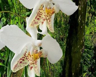 Rainforest Guardians - 11 x 14 Fine Art Orchid Photograph - Flower Photo - Rainforest - Surreal - Ecology - Home Decor - Office Decor
