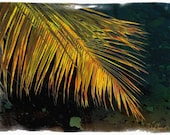 St Kitts Palm 11x8