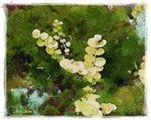Moss Garden (green moss - floral - nature - Watercolor - Fine Art - Decor)