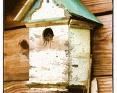 Bird House - Watercolor Print - 8x10