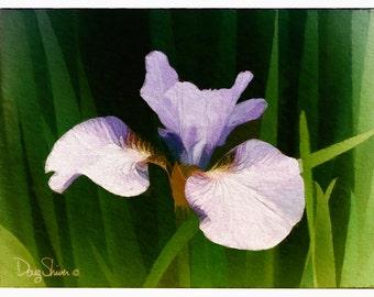 Iris (9x12 - nature - botanical - flower - garden - plants - woodland - moss - ferns - wall decor fine art prints)