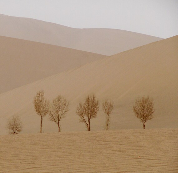 SAND DUNES and TREES note cards set of 6