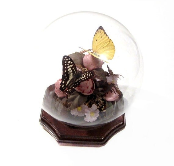 Vintage Preserved Butterflies Under Glass Dome By