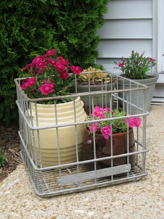 Vintage 1950s - Wire Milk Crate - Perfect for Display and Storage
