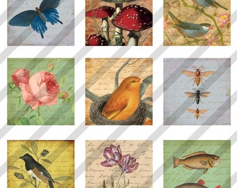 Digital Collage Sheet  1X1 Charms Inchies Nature Images Birds, Bees, etc (Sheet no. FS125) Instant Download