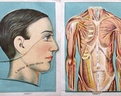 Set 3 Antique 1916 Human Anatomy, Organs Multi Layer Charts, Full Color Great Detail
