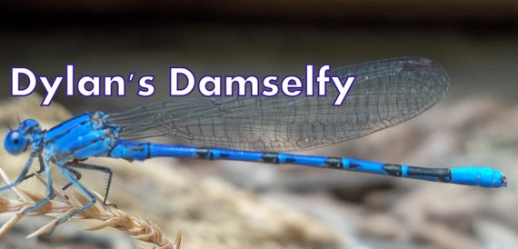 PIF - Damselfly Print - Child Art - Age 9 - Young Entrepreneur