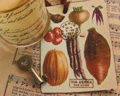 french vegetables gift tags