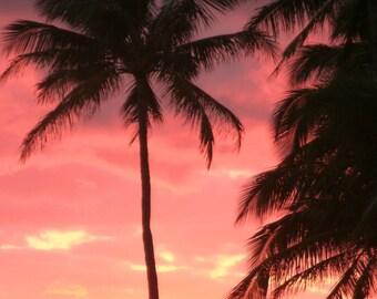 Salsa Palms photograph, signed by artist Schar Freeman