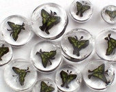 Tiger Swallowtail Butterfly 90 COE Murrini Slices 10