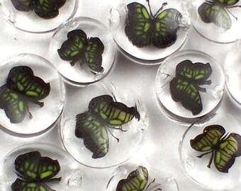 Green Monarch Butterfly II 90 COE Murrini Slices 10