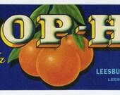 TOP-HI Florida citrus crate label, Leesburg