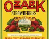 Ozark Missouri StrawberriesRefrigerator Magnet - FREE US SHIPPING