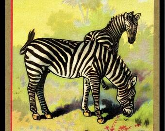 Zebras in the Wild Refrigerator Magnet