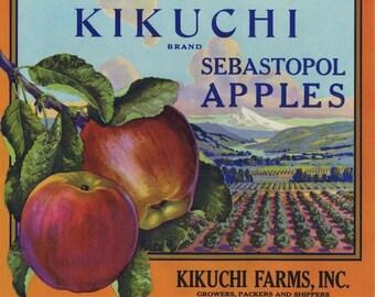 Kikuchi Sebastopol apple crate label
