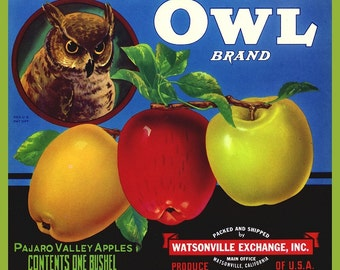 Owl and Apples Fruit Crate Label Refrigerator Magnet - FREE US SHIPPING