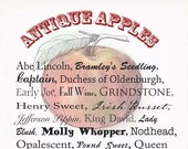 Antique Apples Note Cards (Set of 4)