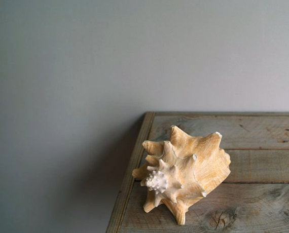 Vintage Conch Shell