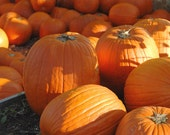 Plentiful Pumkins -- 4x6 Fine Art Photograph