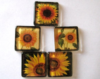 "Sunflower Square Glass Magnets in 1-3/8"" Size Set of 5"