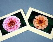 Zinnia Duo of Blank Photograph Greeting Cards by MegzyPhotographs