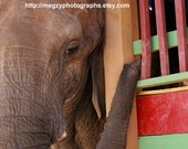 Nosey Nosey - Two Elephant Photograph Greeting Cards