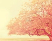 that was just a dream - tree photograph - original fine art print