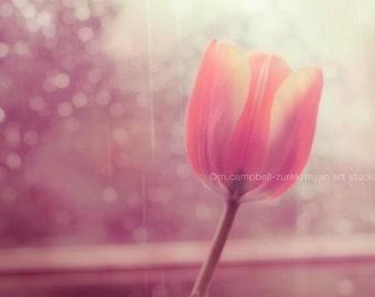 flower photography, tulip photograph, il pleure dans mon coeur, romantic pink peach spring window rainy day purple, french, Valentines