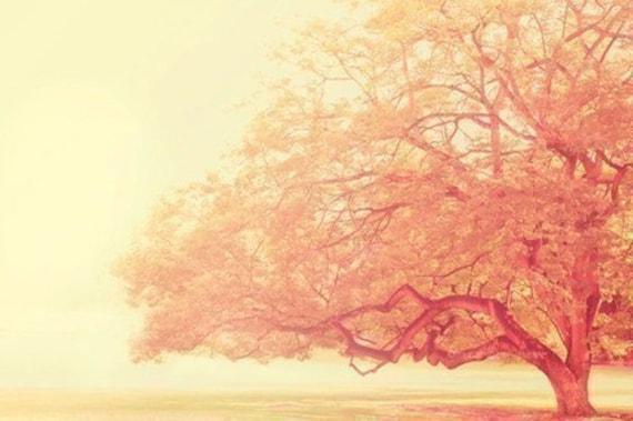 that was just a dream - tree photograph - original fine art print