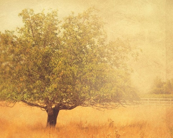 tree photograph, autumn print, rustic home decor, mustard yellow, landscape photo, Los Olives photo, travel photography, wine country art