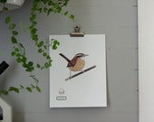 Carolina Wren Print - Digital - Printable PDF