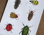 Beetle Postcards