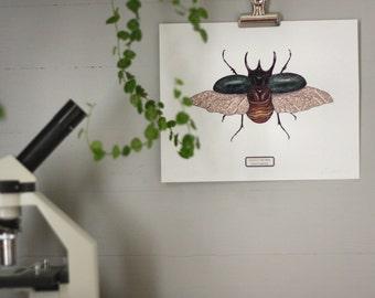 Atlas Beetle Print - Digital - Printable PDF
