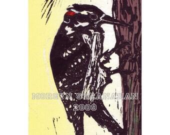 Woodpecker -  hand printed original Linocut