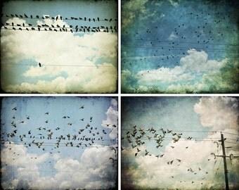 Save 35% Bird Photography Set of Five 8x10 Art Prints, Luster or Metallic, Fine Art Bird Photographs by Tricia McKellar