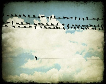 Bird Photography, Many and One (Birds on a Line), 8x10 Fine Art Photograph by Tricia McKellar, Modern Photograph with Vintage Look