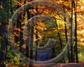 Fall Path - 8 x 10 Original Photograph by Luigi Di Raimo