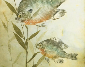Pond Morning- limited edition reproduction of Gyotaku  of Bluegill