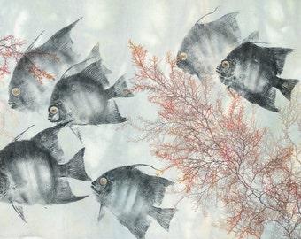 Spadefish Samba- limited edition reproduction of Atlantic Spadefish
