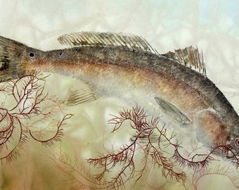 Rolling Redfish- Limited Edition Reproduction of gyotaku of Redfish and seaweed