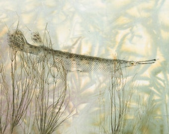 Gar Field--Limited Edition Reproduction of original gyotaku--Gar in field of water weeds