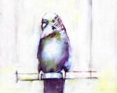 Curious Bird Perching Print