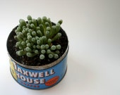 Baby Toes in Vintage Maxwell House Coffee Tin
