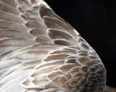 Celestial Wing, giclée print