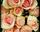 ballerina bouquet, 8X8 inch square photograph