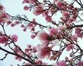 under pink petals, 8X10 inch photograph